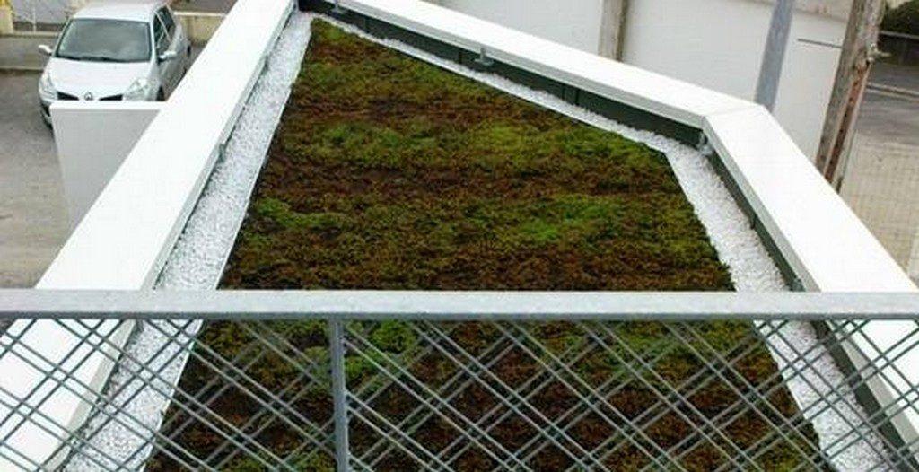 vegetalisee beton